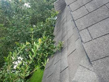 photo of tree limbs touching roof